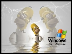 Simpson, Windows, Homer