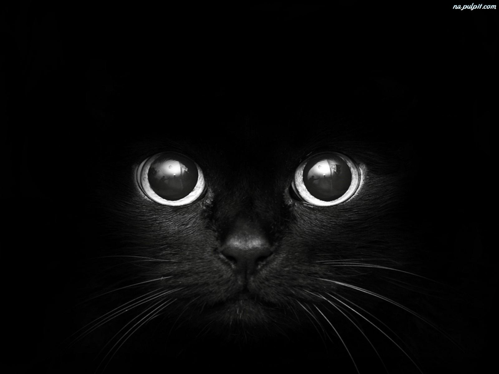 Czarny Kot Na Pulpit